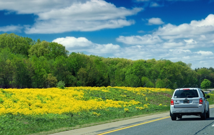 Driving in Spring